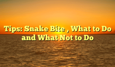 Tips: Snake Bite , What to Do and What Not to Do